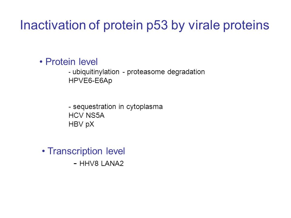 Inactivation of protein p53 by virale proteins