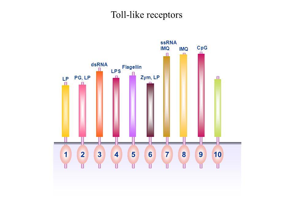 Toll-like receptors 1 2 3 4 5 6 7 8 9 10 ssRNA IMQ CpG IMQ dsRNA