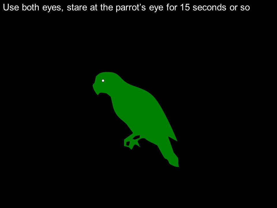 Use both eyes, stare at the parrot's eye for 15 seconds or so
