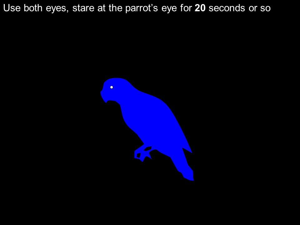 Use both eyes, stare at the parrot's eye for 20 seconds or so