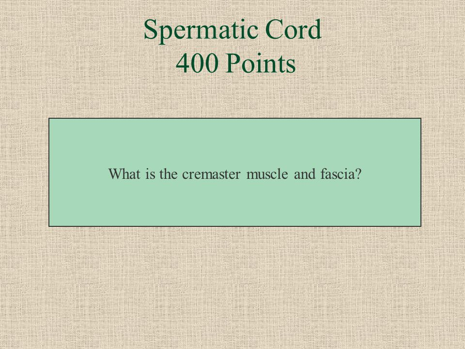 What is the cremaster muscle and fascia