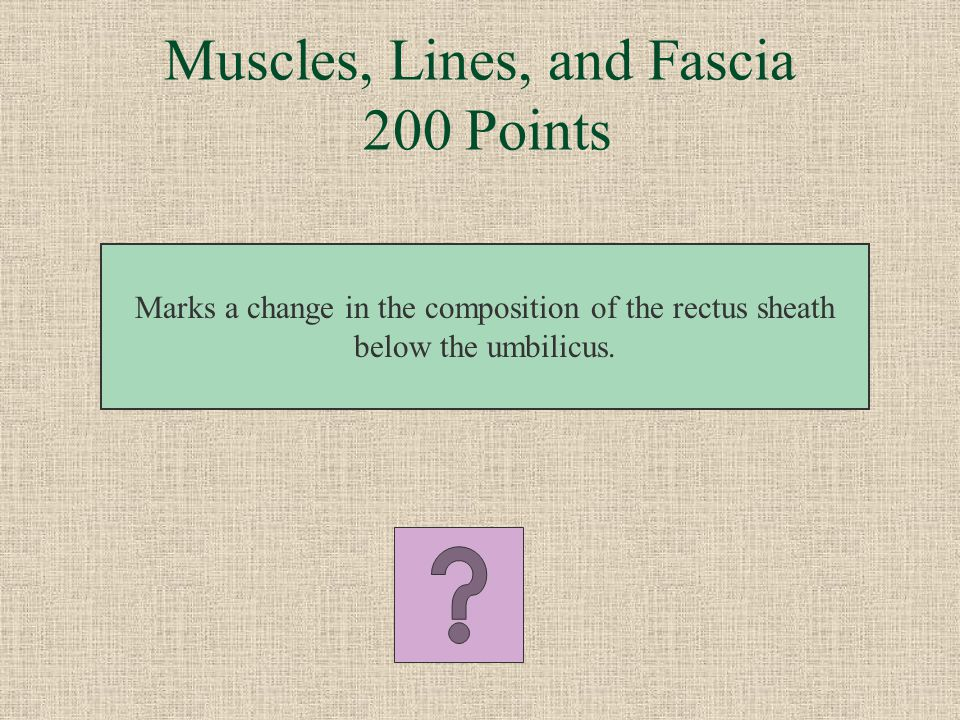 Muscles, Lines, and Fascia 200 Points