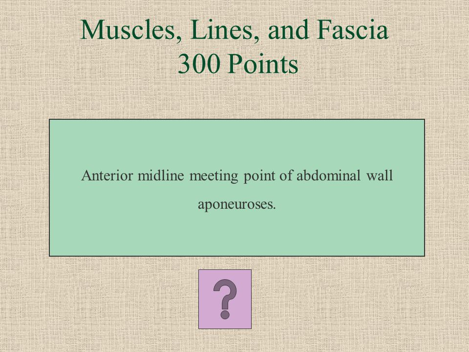 Muscles, Lines, and Fascia 300 Points