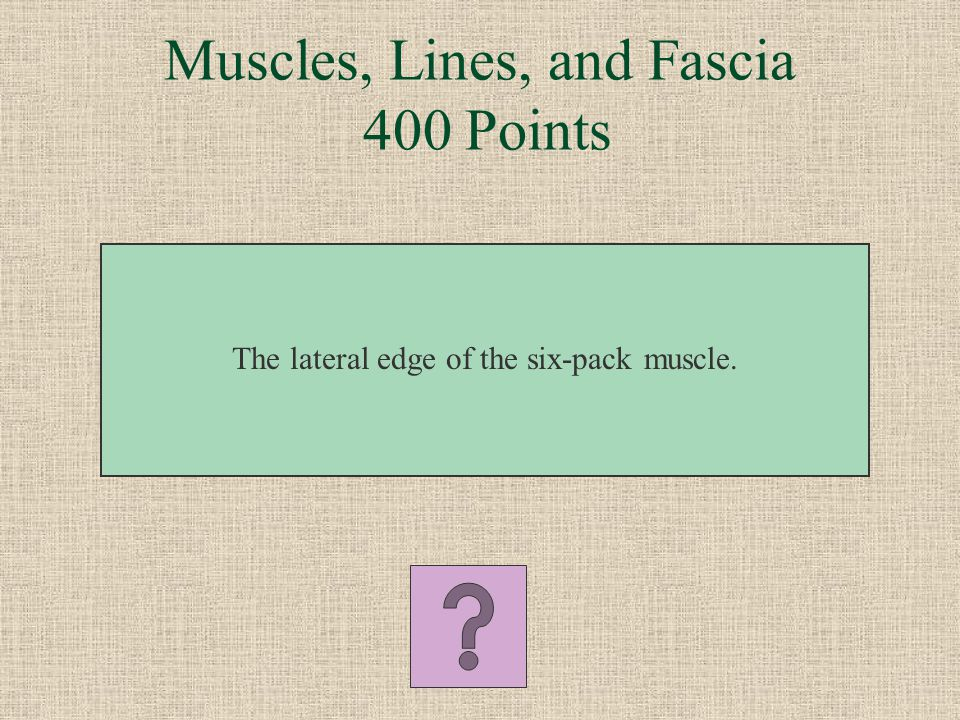 Muscles, Lines, and Fascia 400 Points