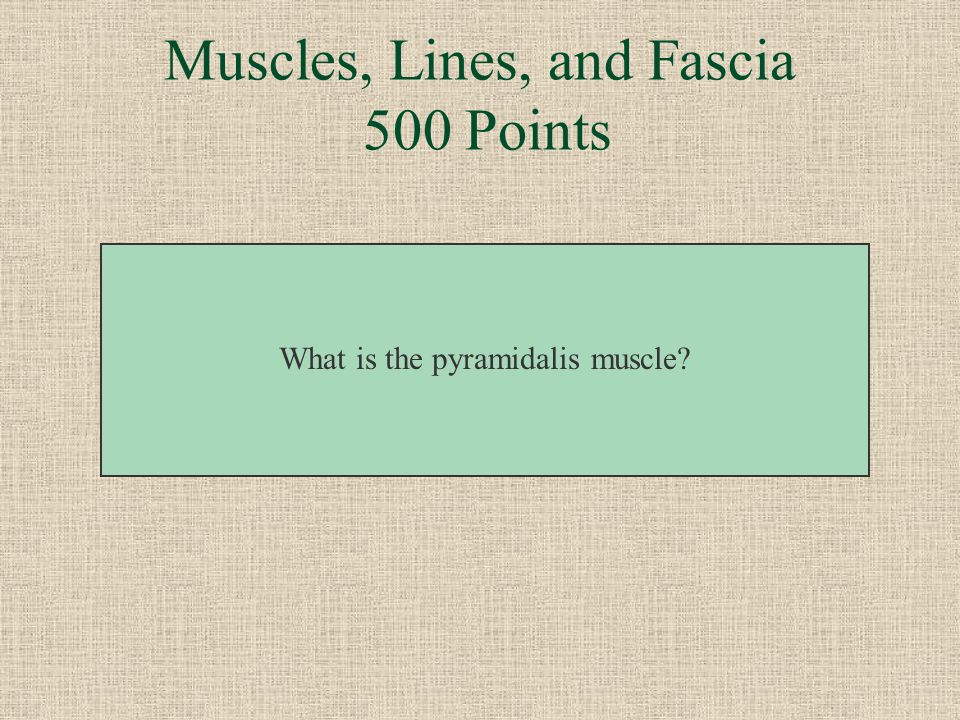 Muscles, Lines, and Fascia 500 Points