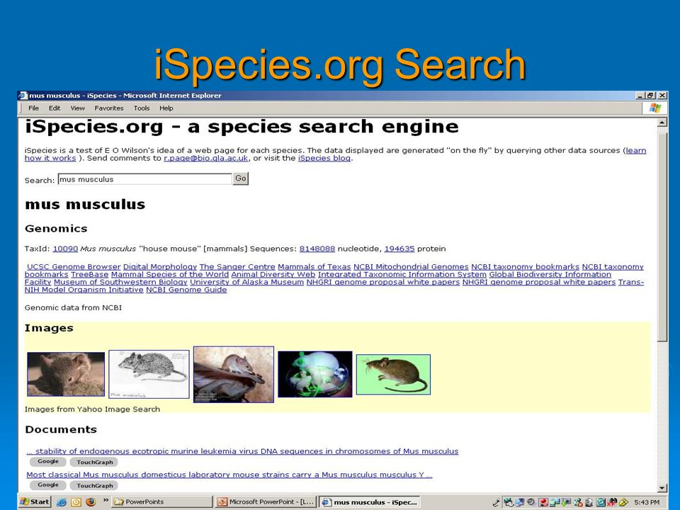 iSpecies.org Search For mus musculus