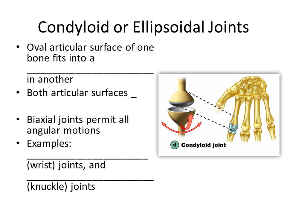 Exam Three Material Chapters 8, 9, ppt video online download Condyloid Joint Examples