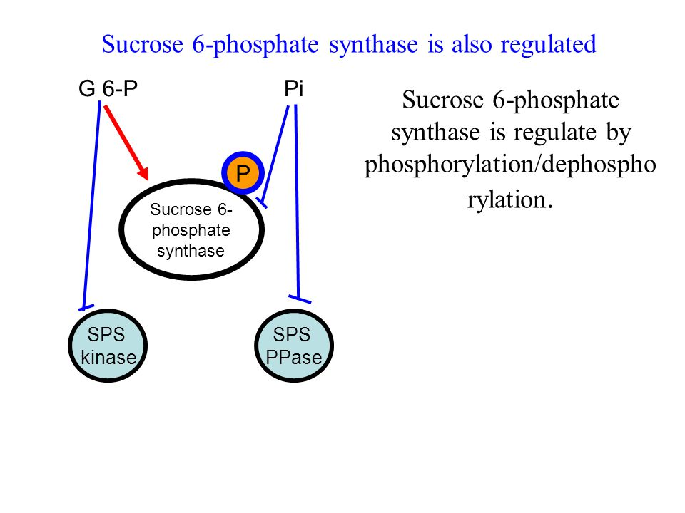 biosynthesis of starch and sucrose pdf