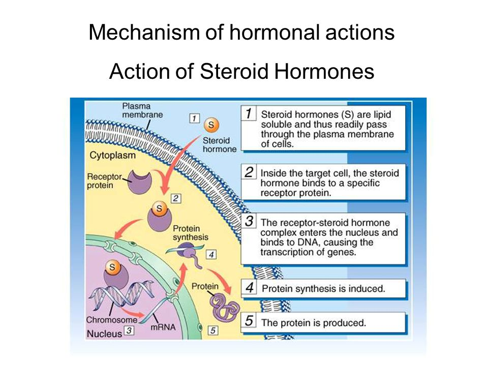 Mechanism of hormonal actions Action of Steroid Hormones