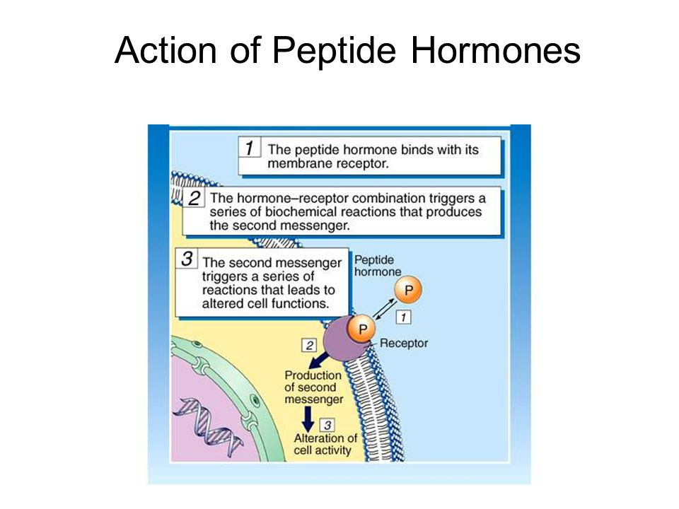 Action of Peptide Hormones