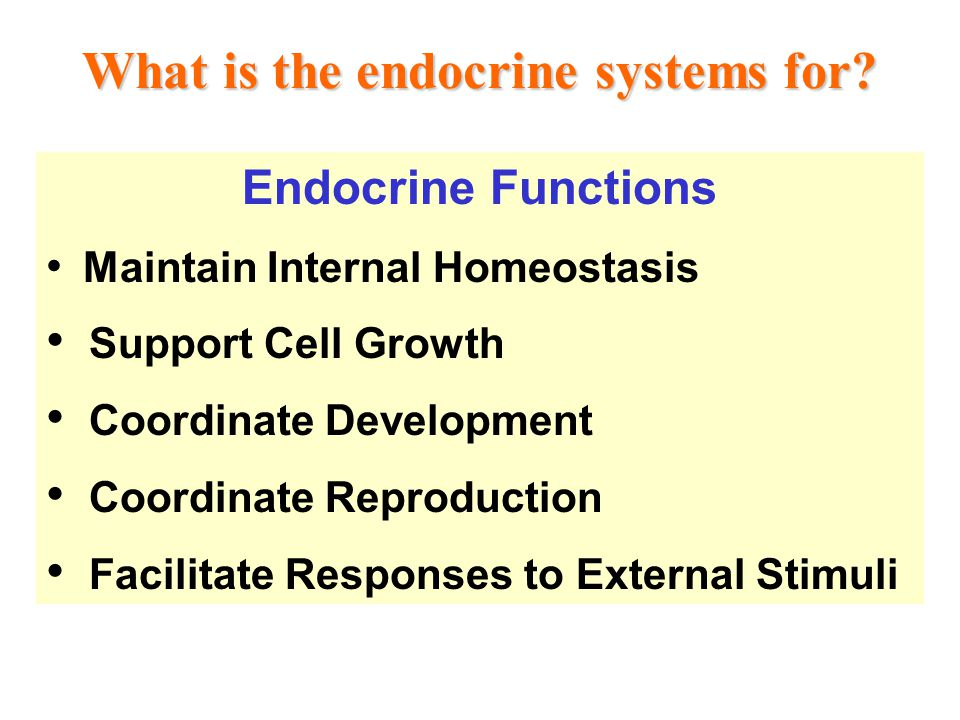 What is the endocrine systems for