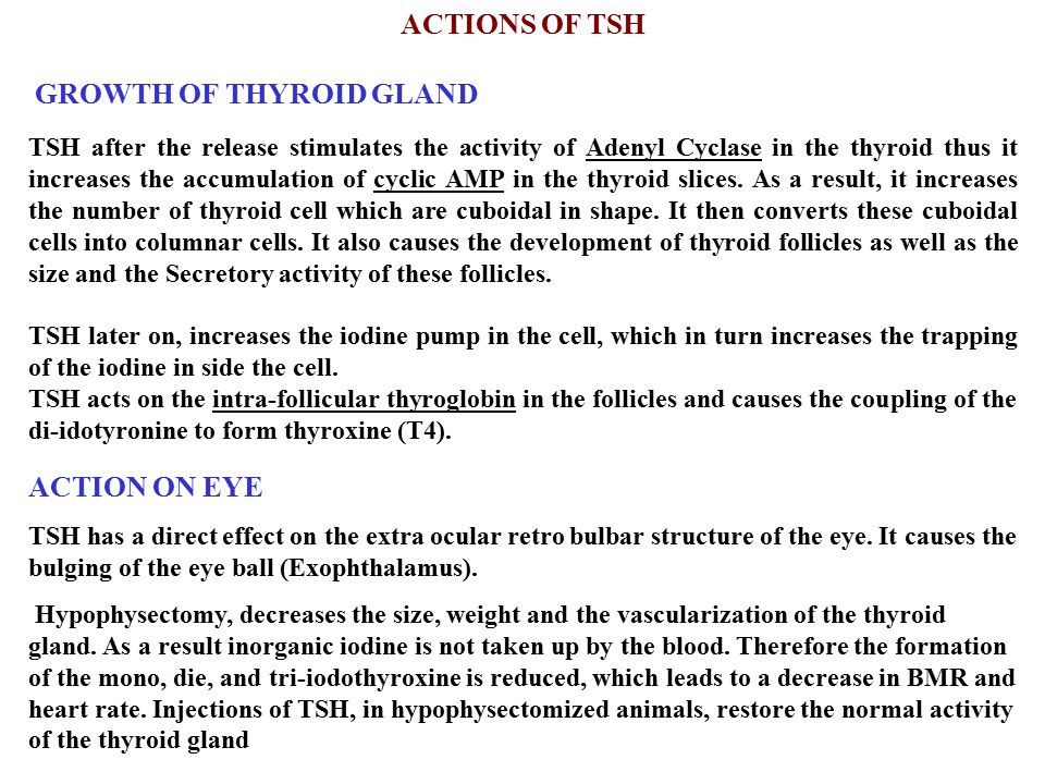 ACTIONS OF TSH ACTION ON EYE GROWTH OF THYROID GLAND