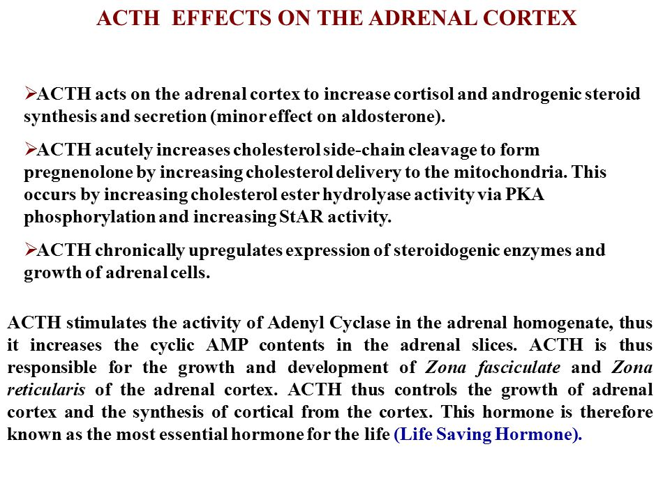 ACTH EFFECTS ON THE ADRENAL CORTEX