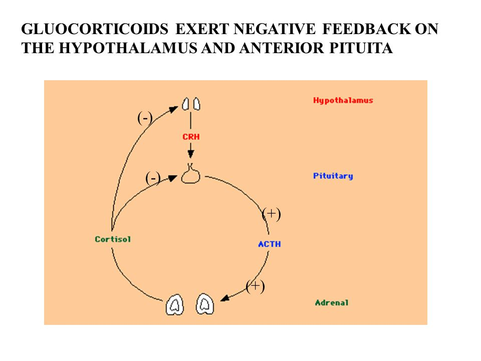 GLUOCORTICOIDS EXERT NEGATIVE FEEDBACK ON THE HYPOTHALAMUS AND ANTERIOR PITUITA