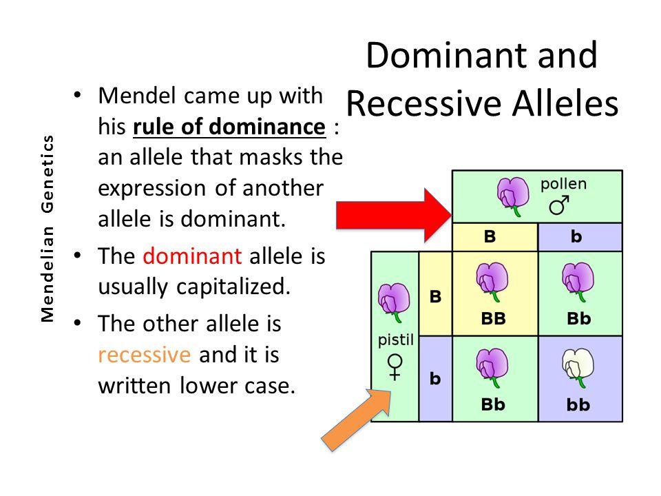 Dominant Recessive What is genetics? GENE...
