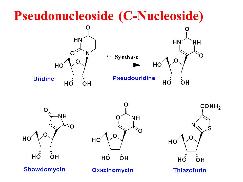 A New Role for Pseudouridine in ncRNA and mRNA