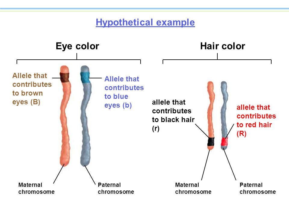 Meiosis Ppt Download