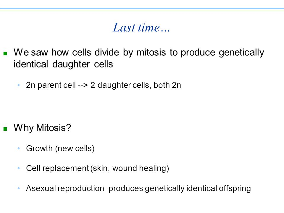 Asexually produced daughter cells are pic 390