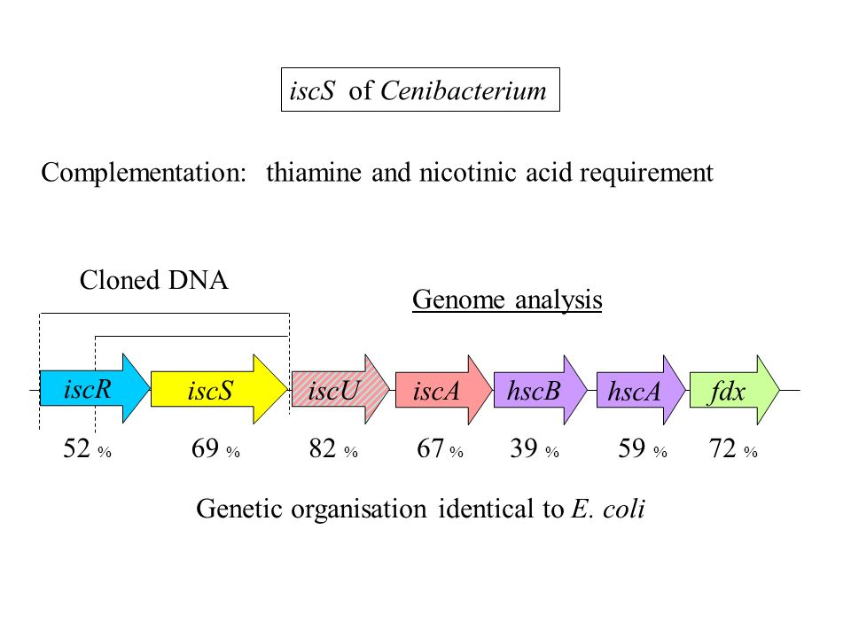 iscS of Cenibacterium Complementation: thiamine and nicotinic acid requirement. Cloned DNA. Genome analysis.