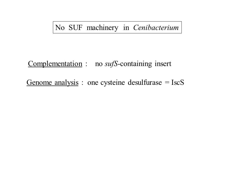 No SUF machinery in Cenibacterium