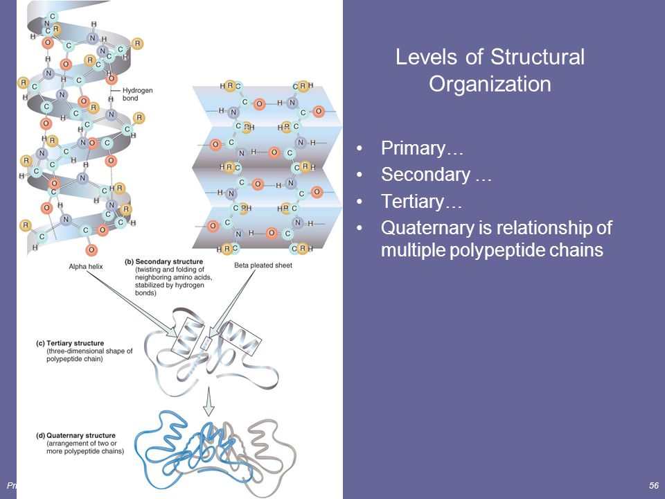 The Chemical Level of Organization Lecture Outline - ppt video ...