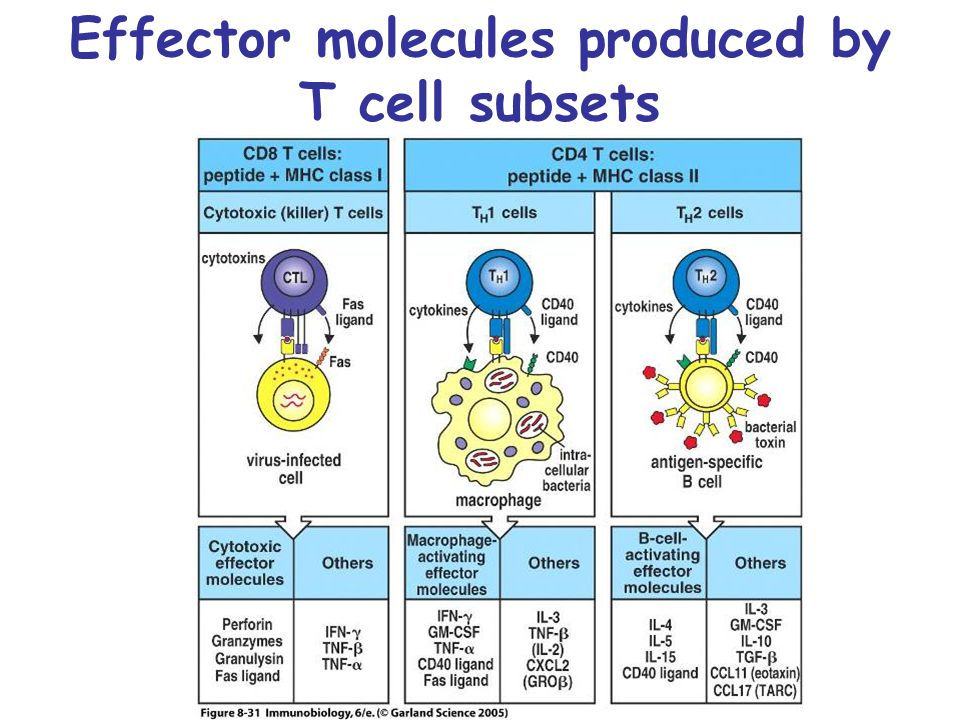 Effector molecules produced by T cell subsets