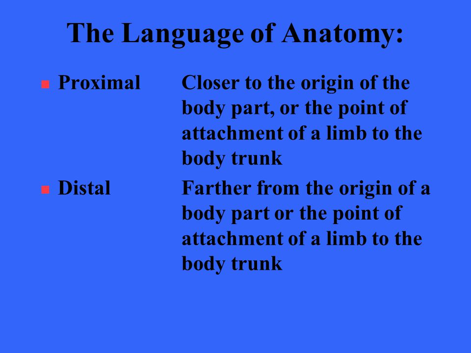 Old Fashioned Origin Of Anatomy Model - Anatomy And Physiology ...