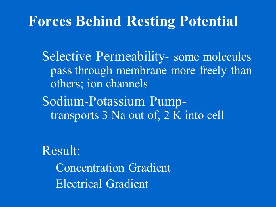Forces Behind Resting Potential
