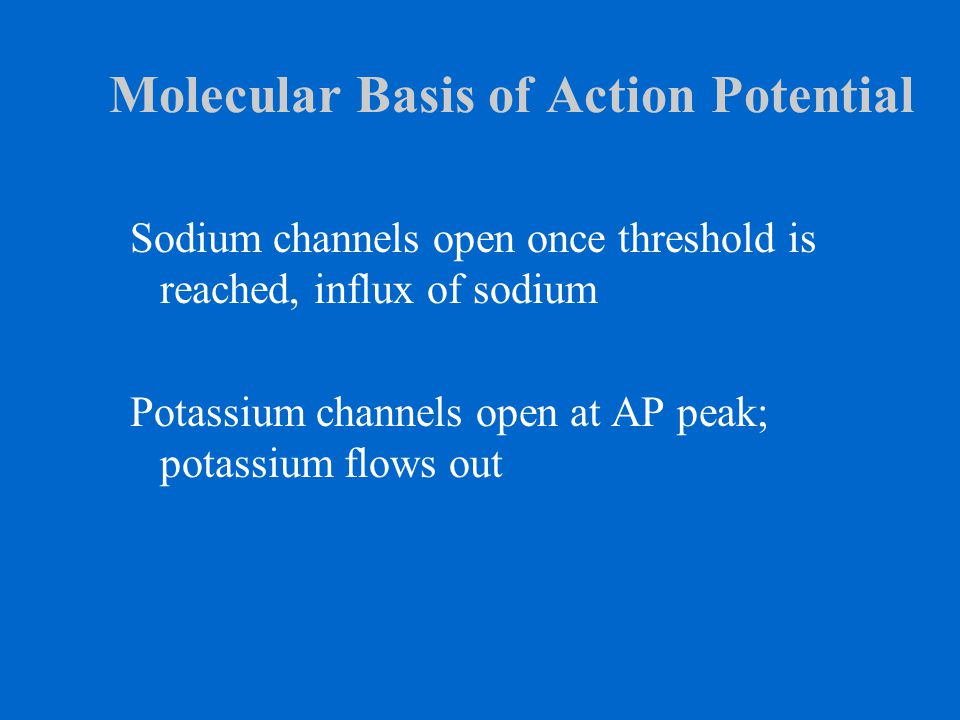 Molecular Basis of Action Potential