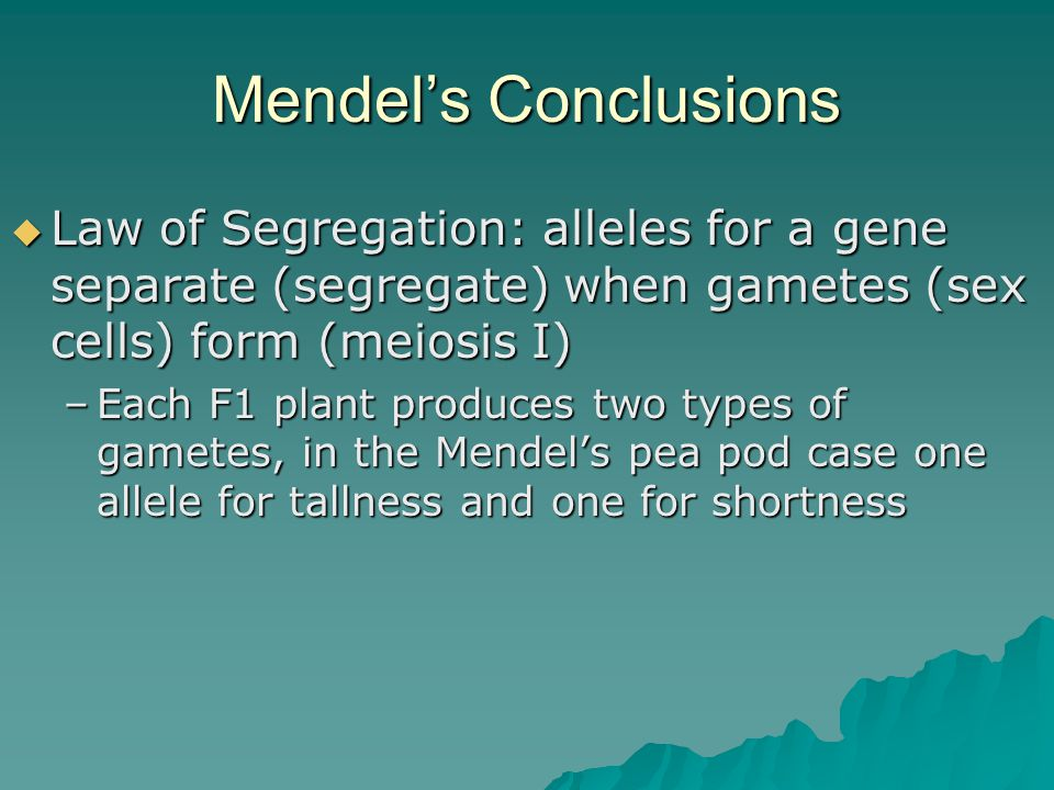 Mendel's Conclusions Law of Segregation: alleles for a gene separate (segregate) when gametes (sex cells) form (meiosis I)