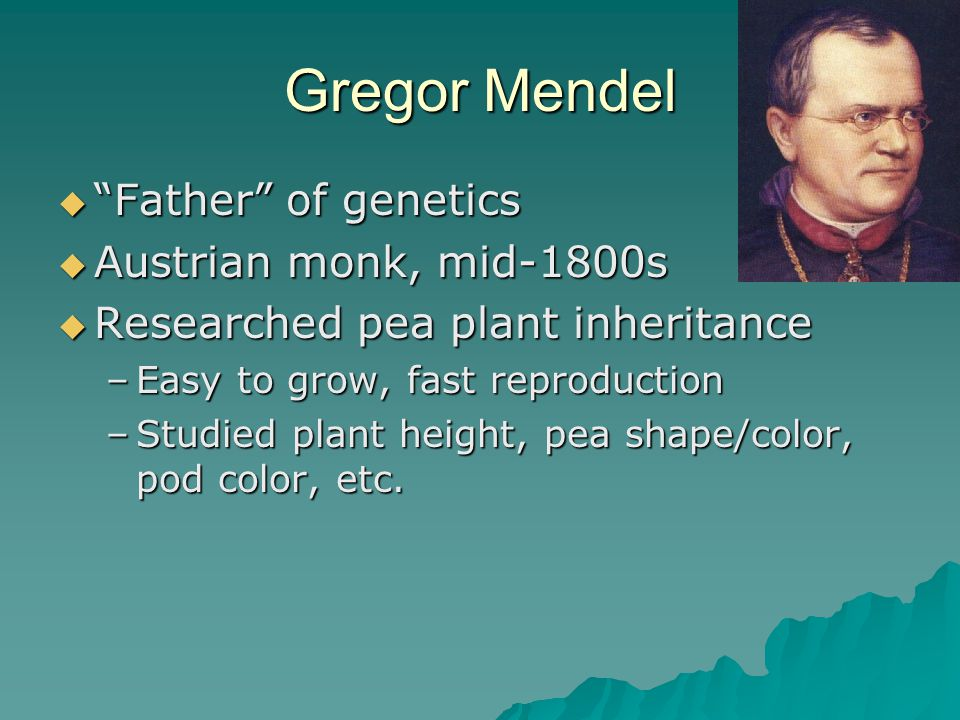 Gregor Mendel Father of genetics Austrian monk, mid-1800s