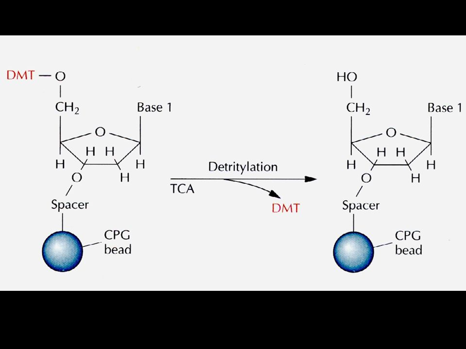 chemical synthesis of dna pdf