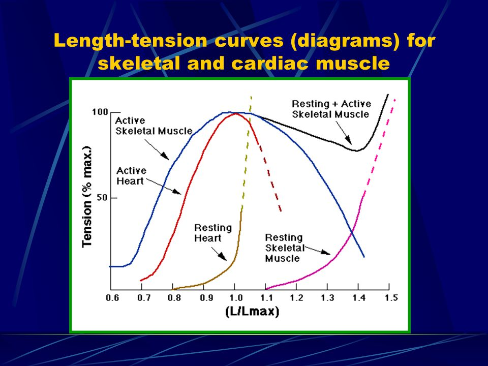 length tension relationship skeletal and cardiac muscle