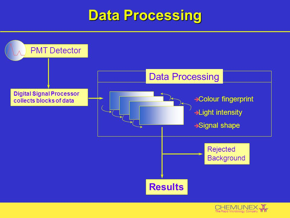 download Database Theory
