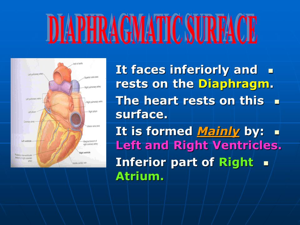 DIAPHRAGMATIC SURFACE