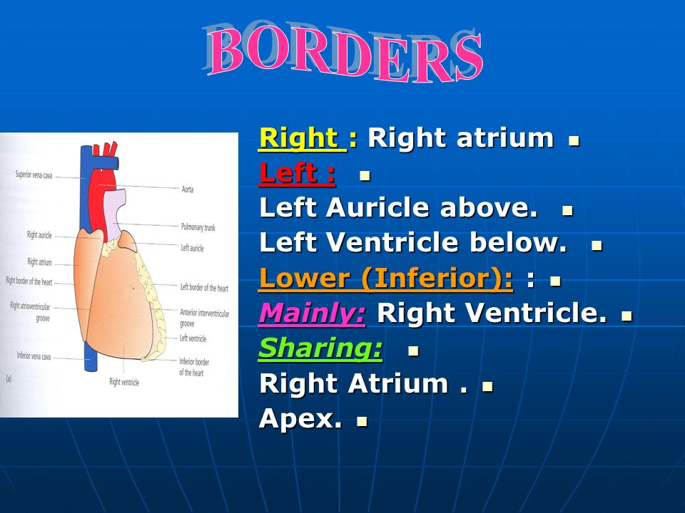 BORDERS Right : Right atrium Left : Left Auricle above.