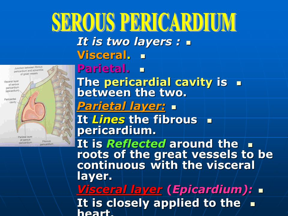 SEROUS PERICARDIUM It is two layers : Visceral. Parietal.
