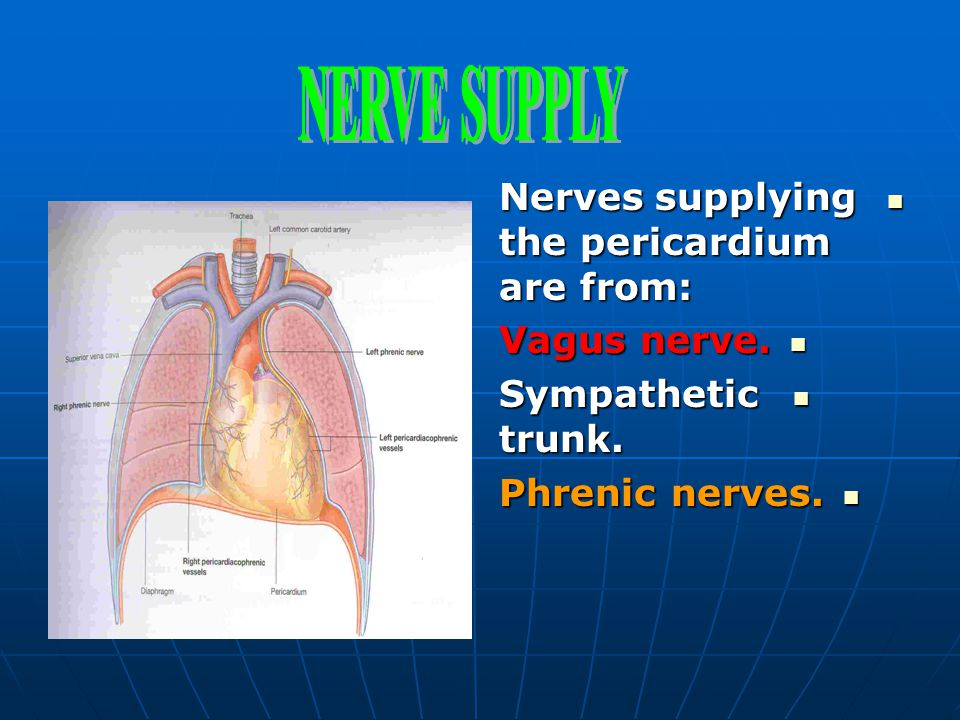 NERVE SUPPLY Nerves supplying the pericardium are from: Vagus nerve.