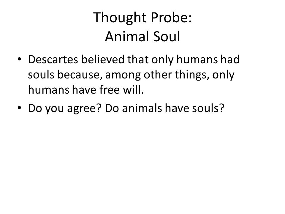 Thought Probe: Animal Soul
