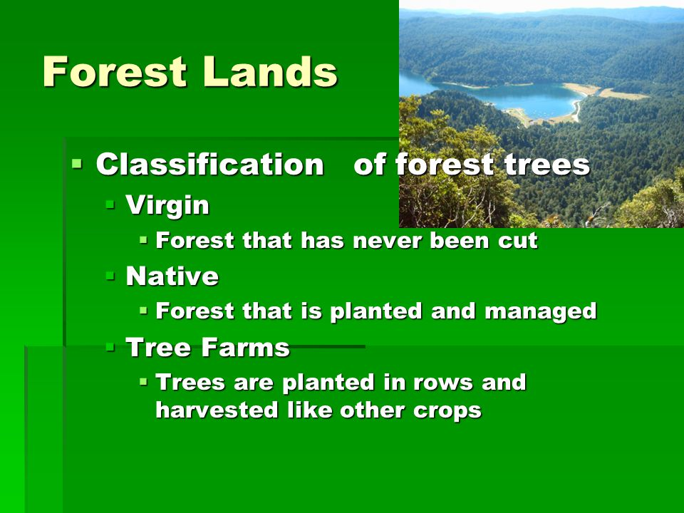 Forest Lands Classification of forest trees Virgin Native Tree Farms