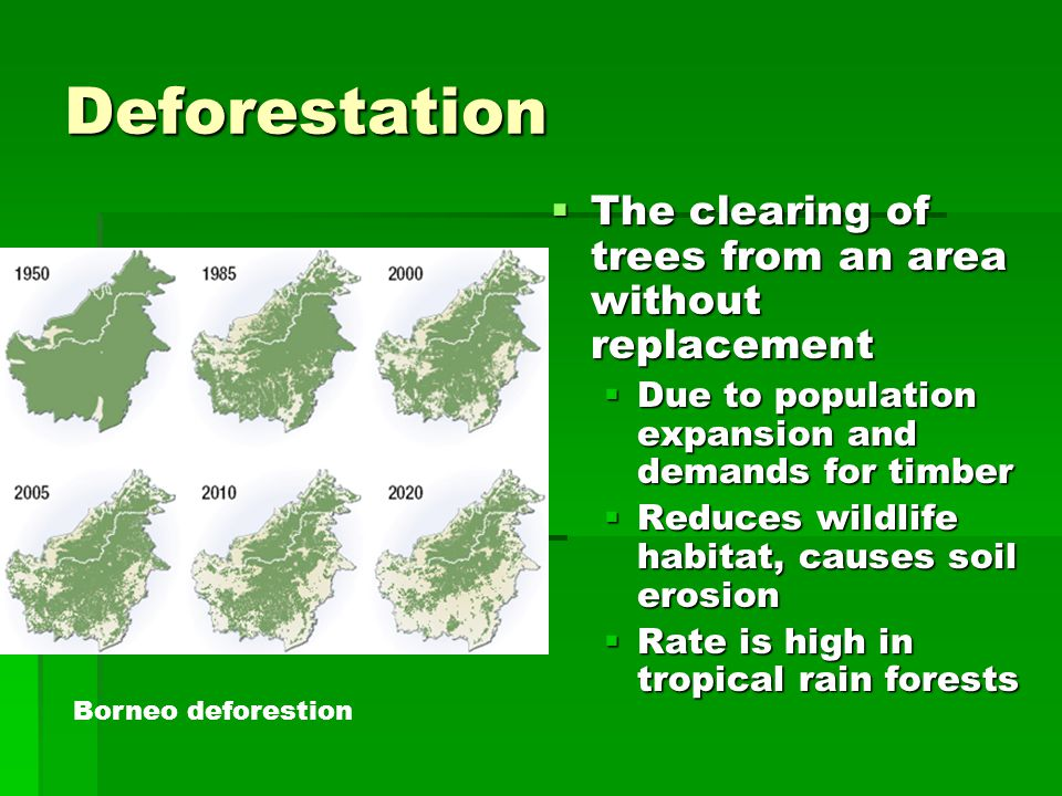 Deforestation The clearing of trees from an area without replacement