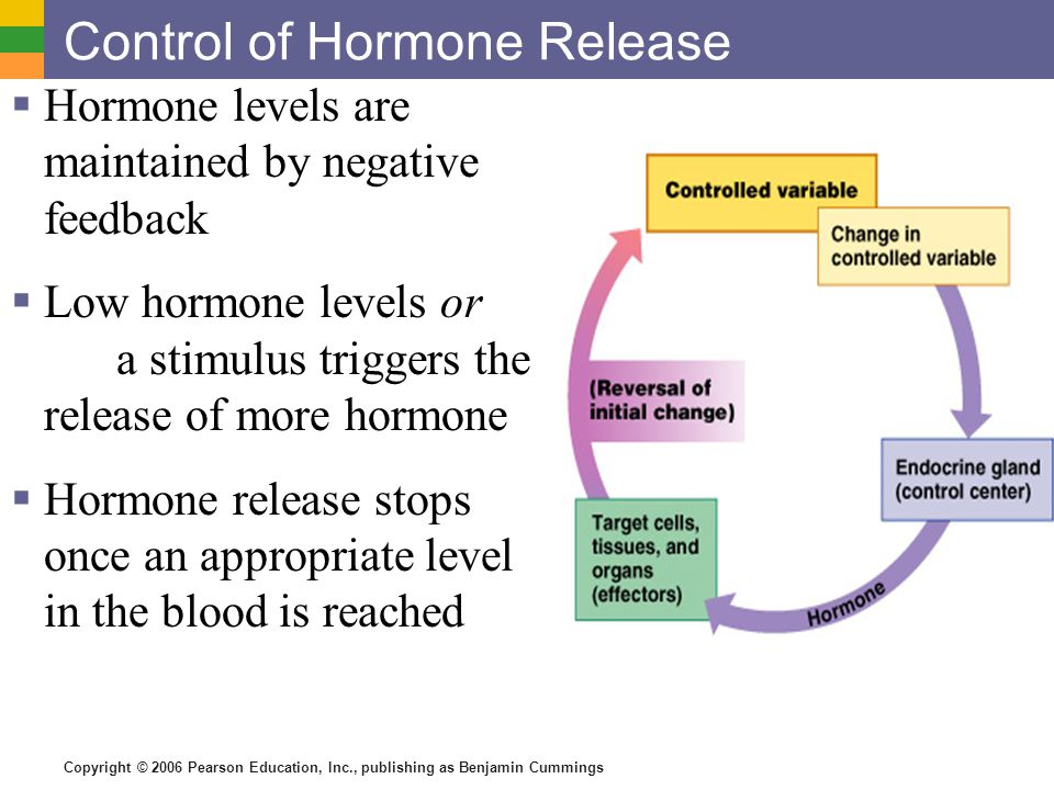 The Endocrine System chemical messages (hormones) that are