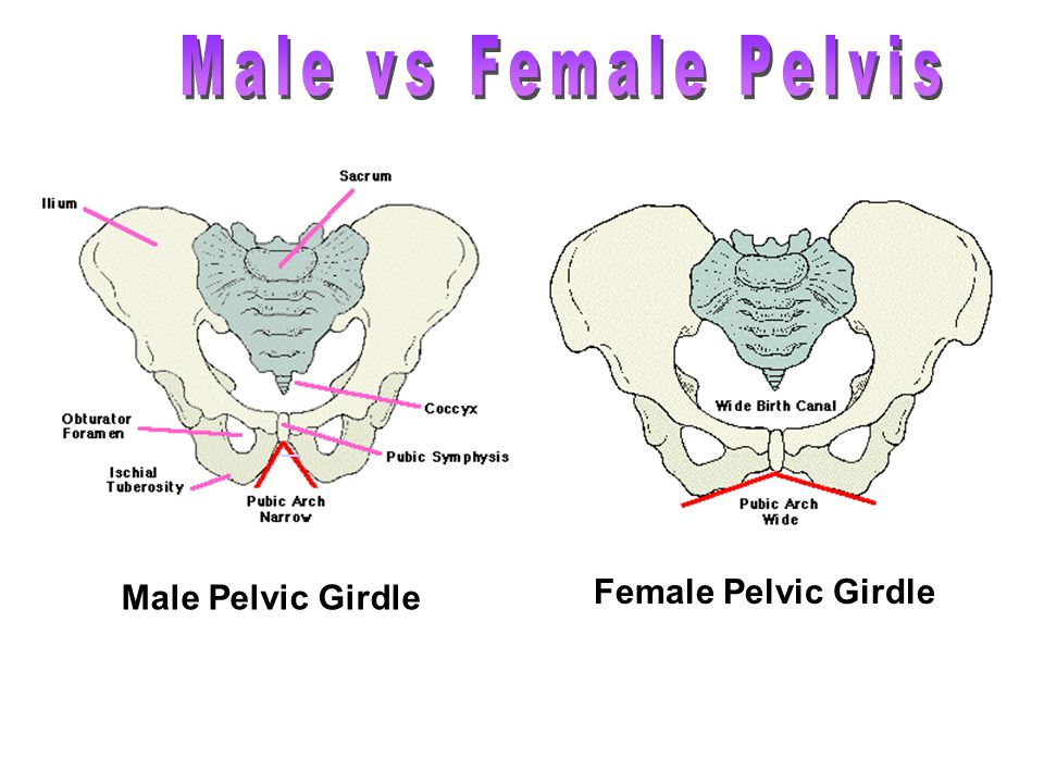 male vs female All the details and information of which is better, male or female pomeranians the best choice in single and multi-dog households.