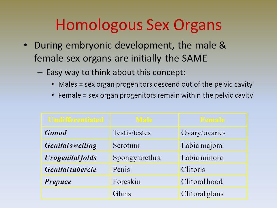 Homologous Sex Organs 10