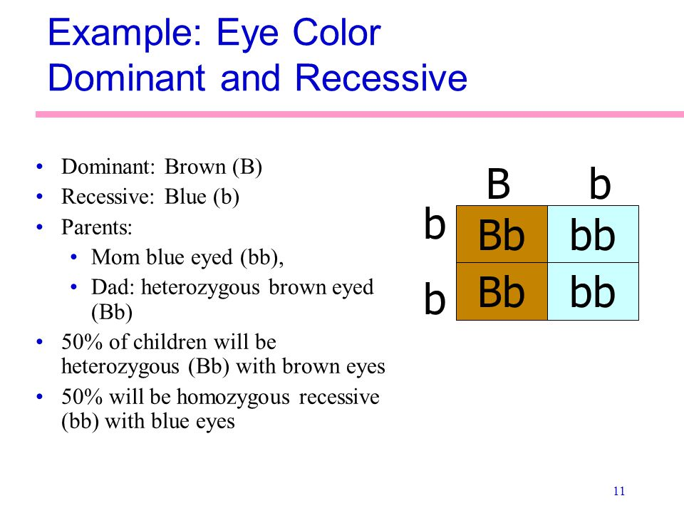 Example: Eye Color Dominant and Recessive