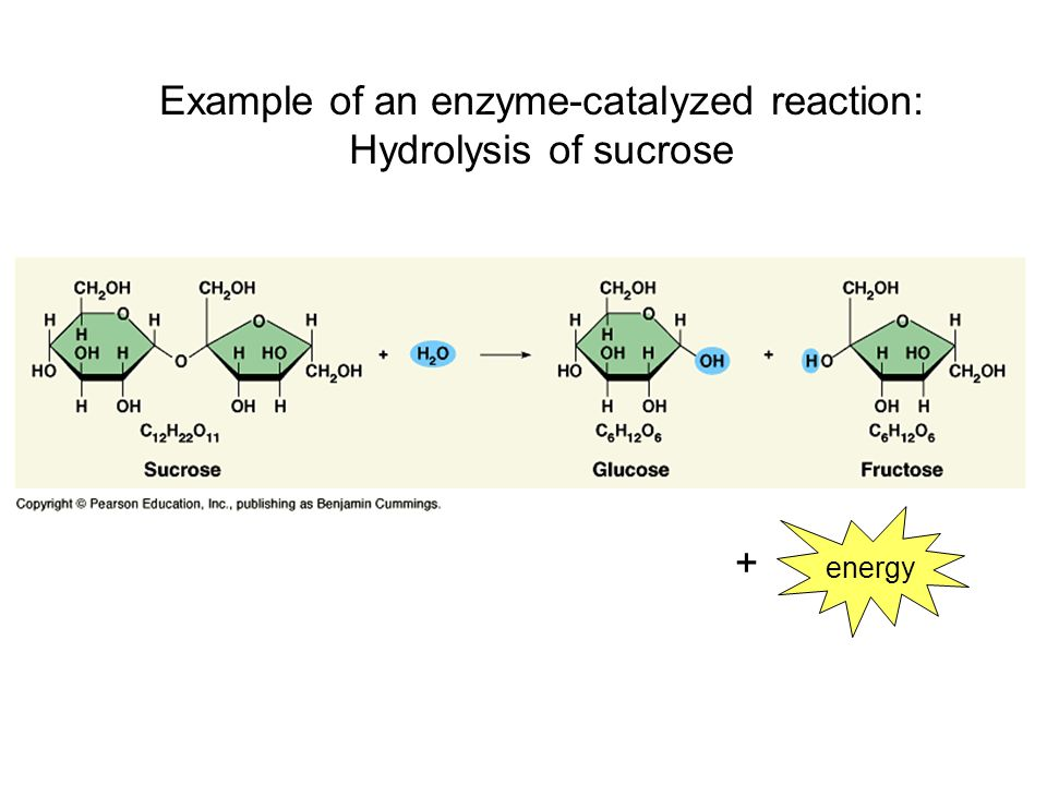 Enzyme-Catalyzed Reactions— What Affects Their Rates?