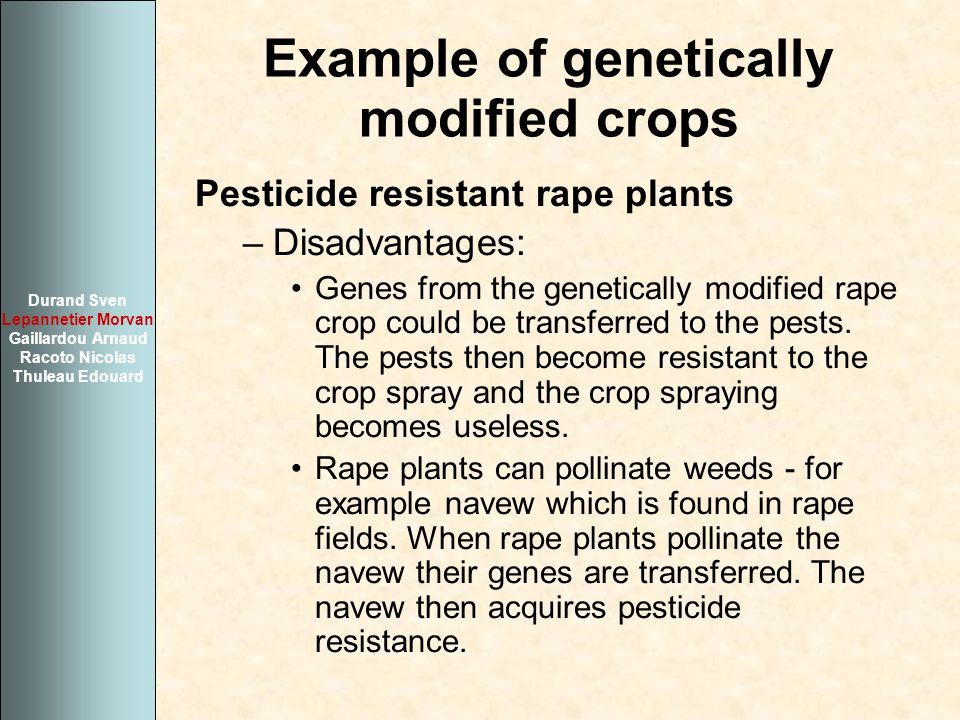 Example of genetically modified crops