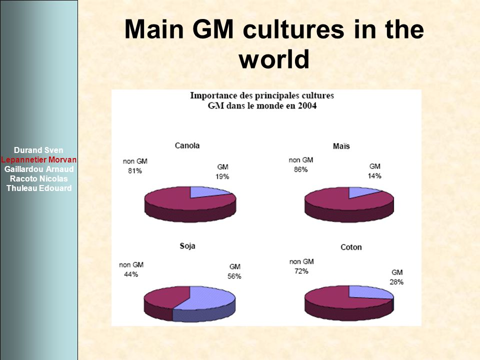 Main GM cultures in the world