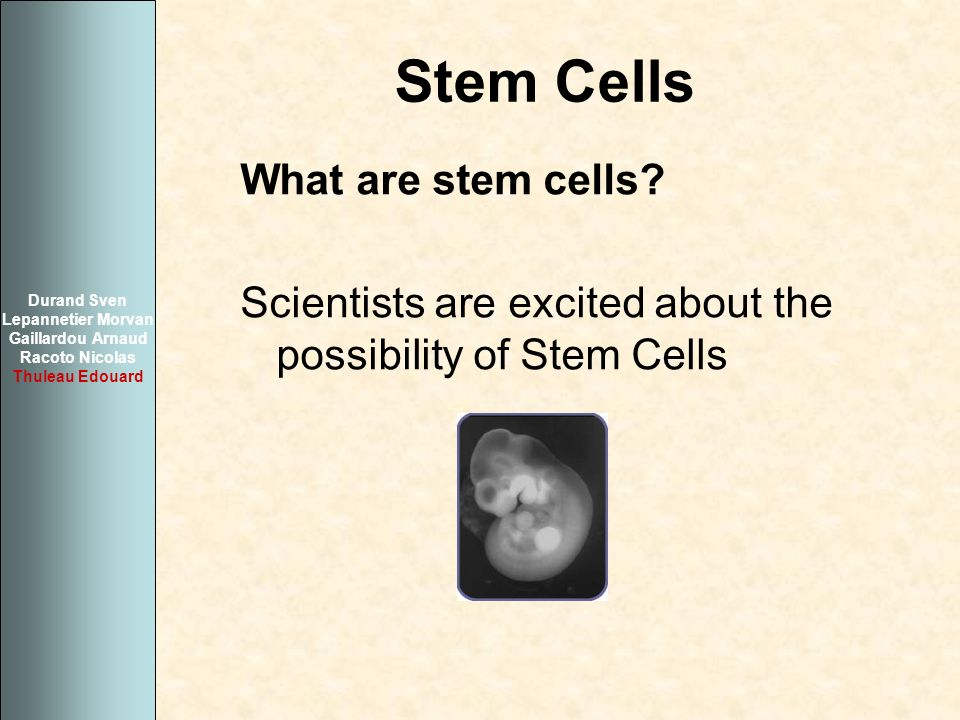Stem Cells What are stem cells