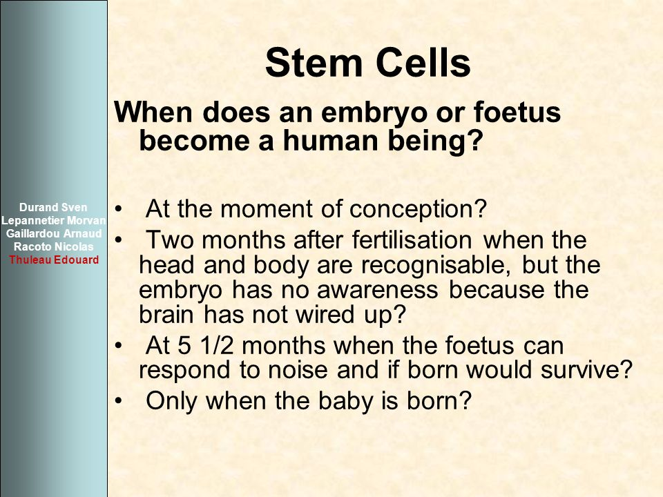 Stem Cells When does an embryo or foetus become a human being